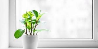 Kako izabrati pravo staklo za PVC stolariju